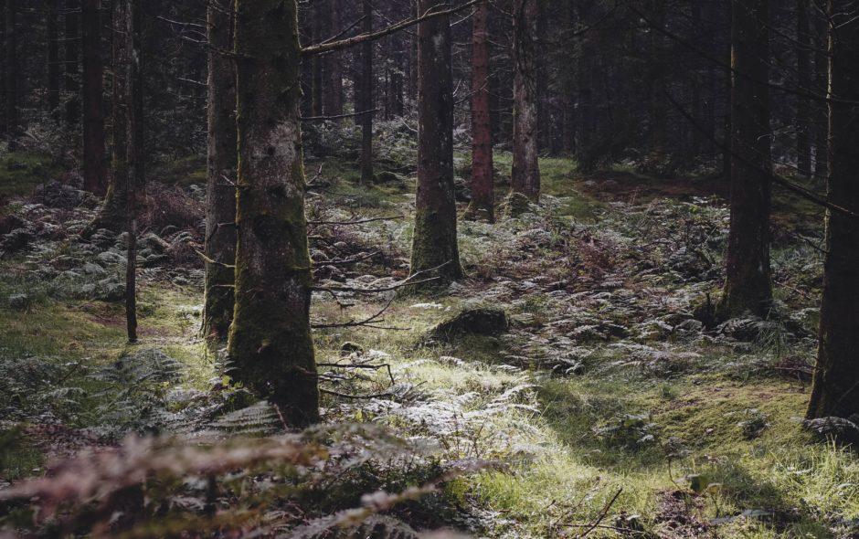 Skrýš (Johan Theorin)